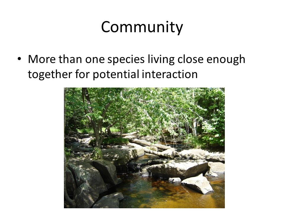 Community More than one species living close enough together for potential interaction