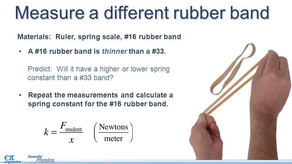 Materials: Ruler, spring scale, #16 rubber band Measure a different rubber band A #16 rubber band is thinner than a #33. Repeat the measurements and c