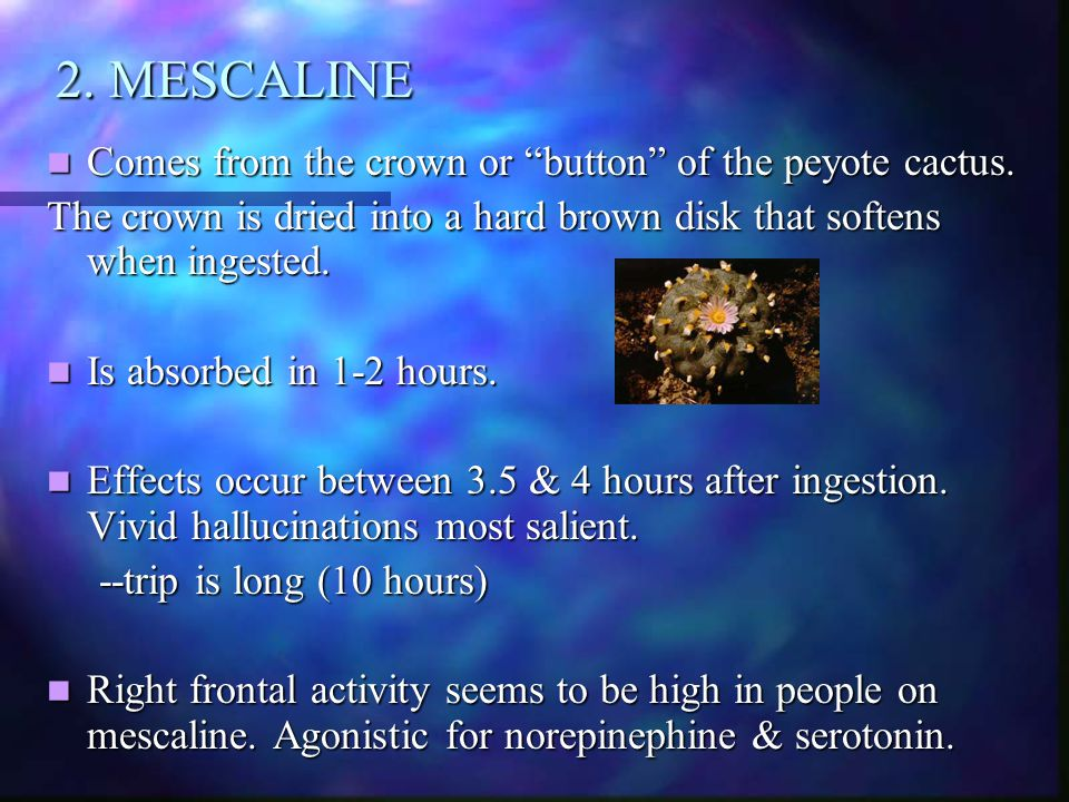 """2. MESCALINE Comes from the crown or """"button"""" of the peyote cactus. Comes from the crown or """"button"""" of the peyote cactus. The crown is dried into a h"""