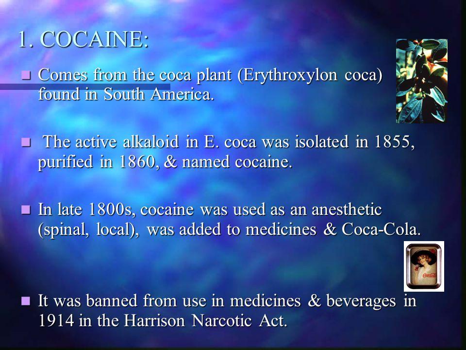 1. COCAINE: Comes from the coca plant (Erythroxylon coca) found in South America. Comes from the coca plant (Erythroxylon coca) found in South America