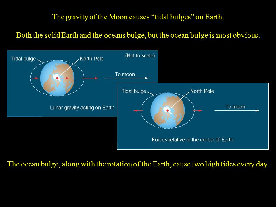 "The gravity of the Moon causes ""tidal bulges"" on Earth. Both the solid Earth and the oceans bulge, but the ocean bulge is most obvious. The ocean bulg"