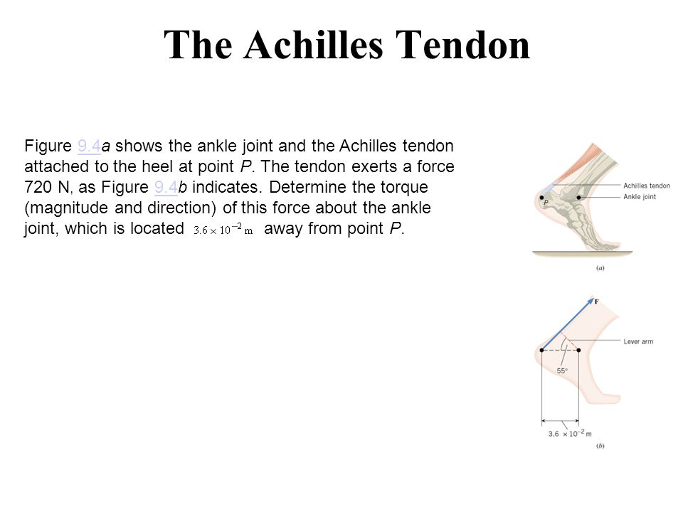 The Achilles Tendon Figure 9.4a shows the ankle joint and the Achilles tendon attached to the heel at point P. The tendon exerts a force 720 N, as Fig