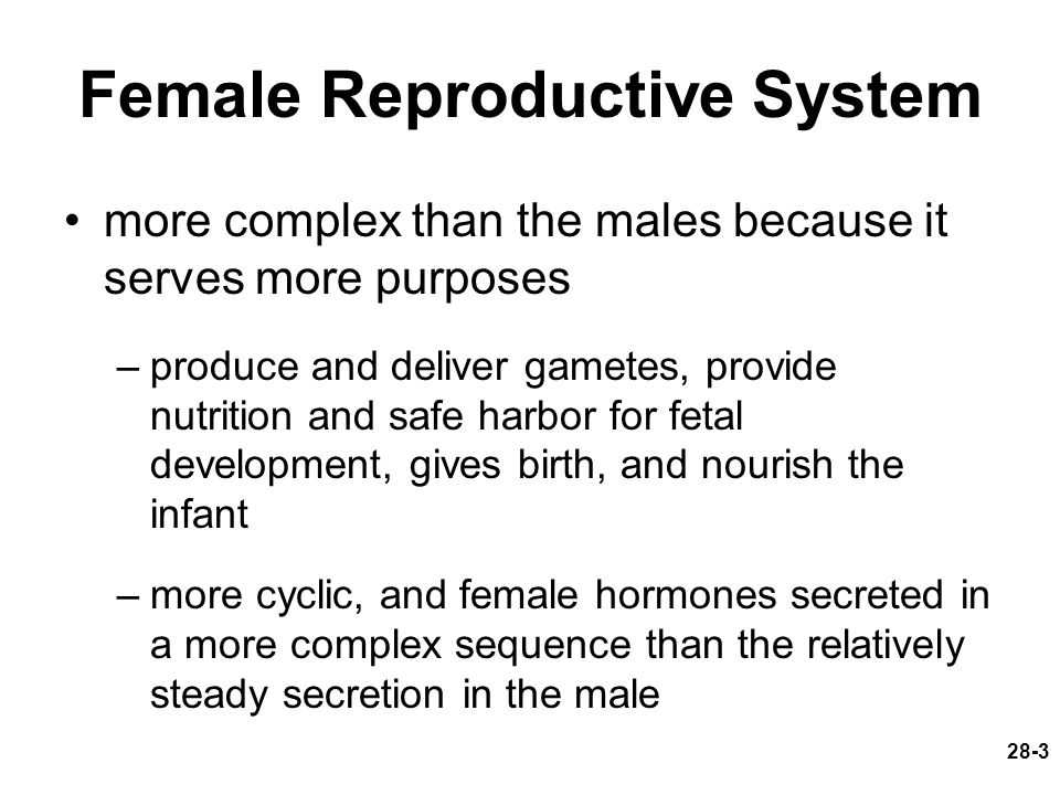 Female Reproductive System more complex than the males because it serves more purposes –produce and deliver gametes, provide nutrition and safe harbor