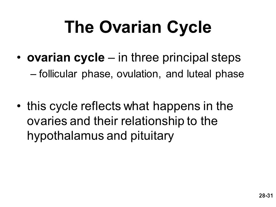 The Ovarian Cycle ovarian cycle – in three principal steps –follicular phase, ovulation, and luteal phase this cycle reflects what happens in the ovar