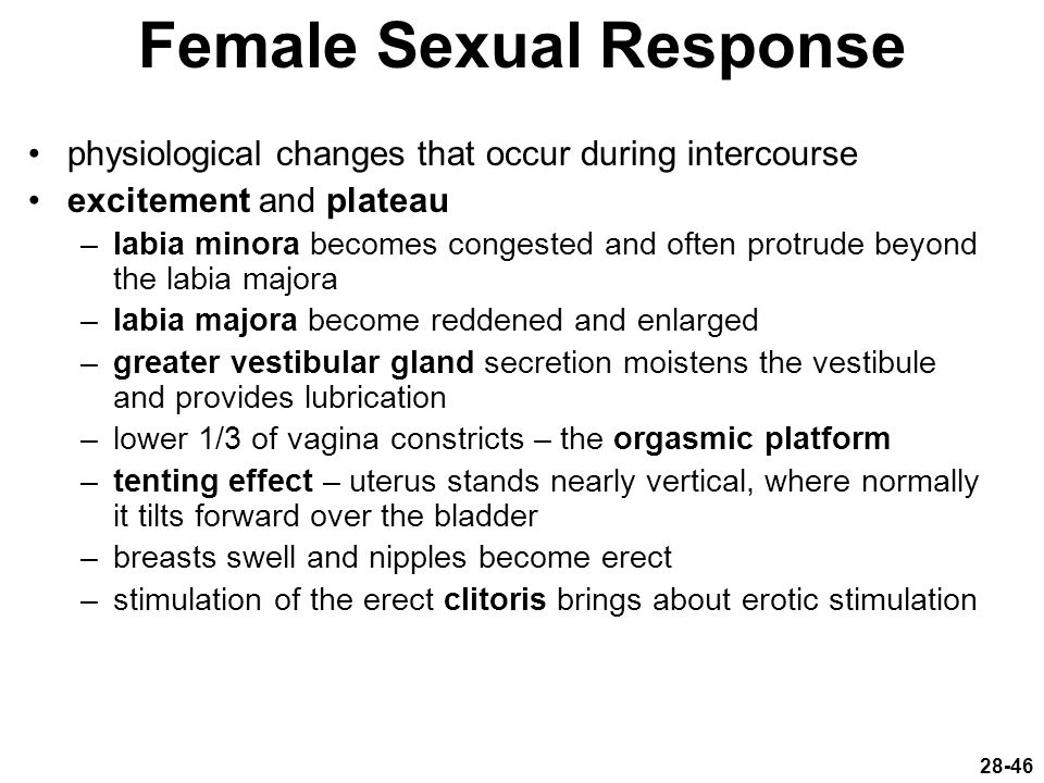 Female Sexual Response physiological changes that occur during intercourse excitement and plateau –labia minora becomes congested and often protrude b