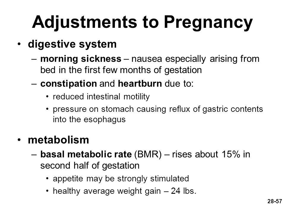 28-57 Adjustments to Pregnancy digestive system –morning sickness – nausea especially arising from bed in the first few months of gestation –constipat