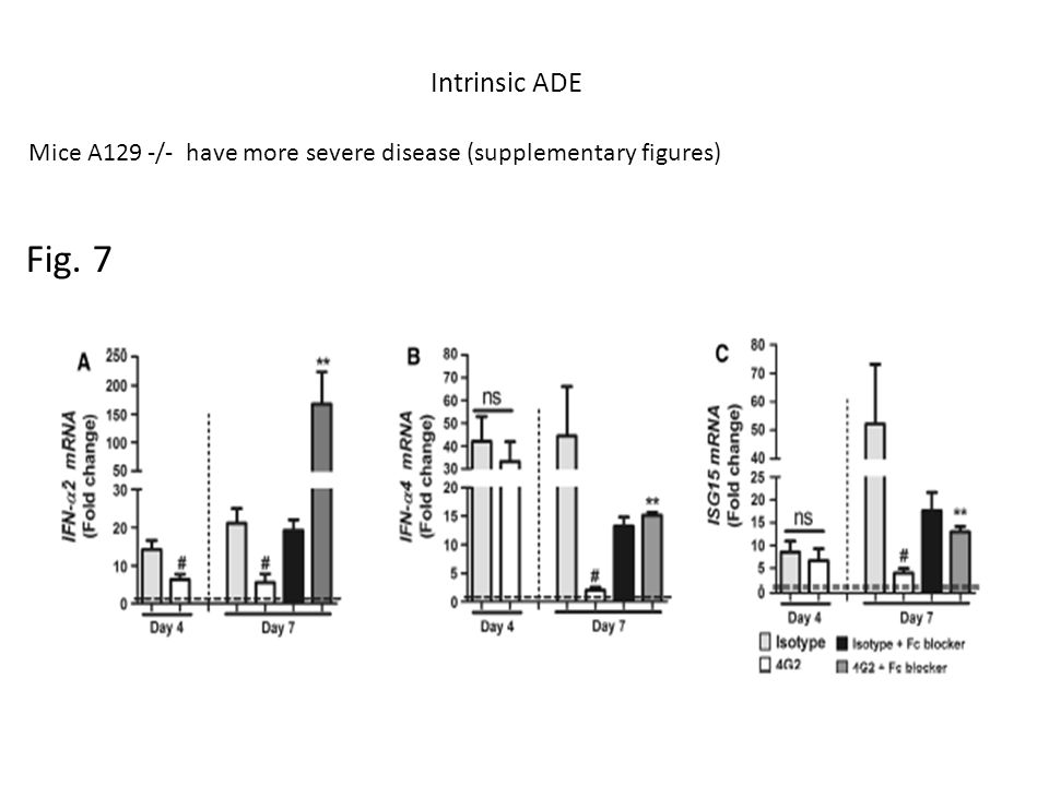 Fig. 7 Intrinsic ADE Mice A129 -/- have more severe disease (supplementary figures)