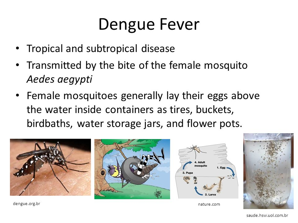 Dengue Map Absent Improbable Probable Present
