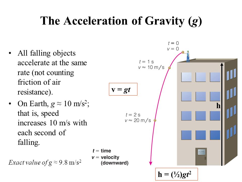 The Acceleration of Gravity (g) All falling objects accelerate at the same rate (not counting friction of air resistance).