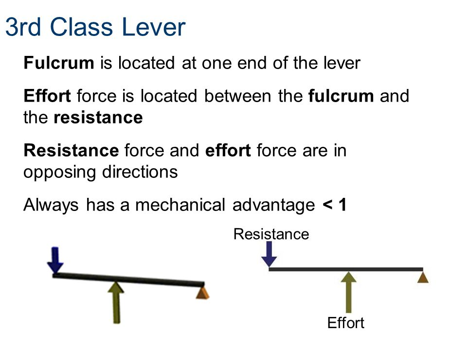 3rd Class Lever Fulcrum is located at one end of the lever Effort force is located between the fulcrum and the resistance Resistance force and effort