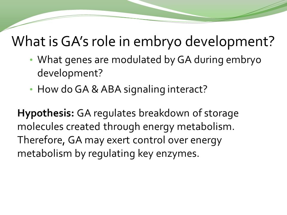 What is GA's role in embryo development. What genes are modulated by GA during embryo development.
