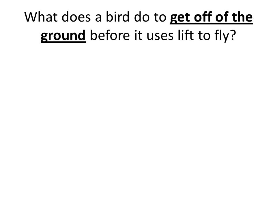 What does a bird do to get off of the ground before it uses lift to fly?