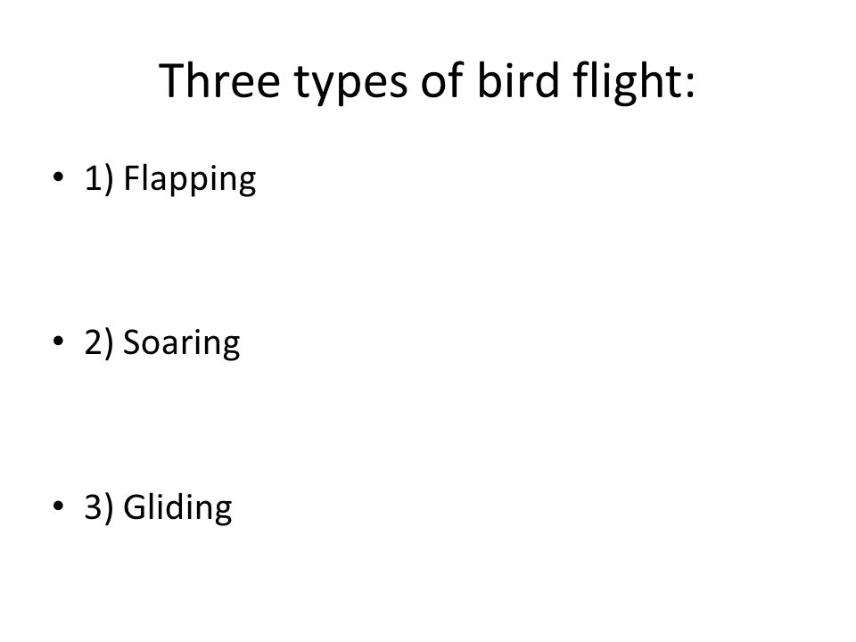 Three types of bird flight: 1) Flapping 2) Soaring 3) Gliding