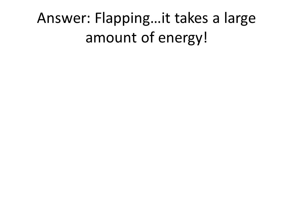 Answer: Flapping…it takes a large amount of energy!