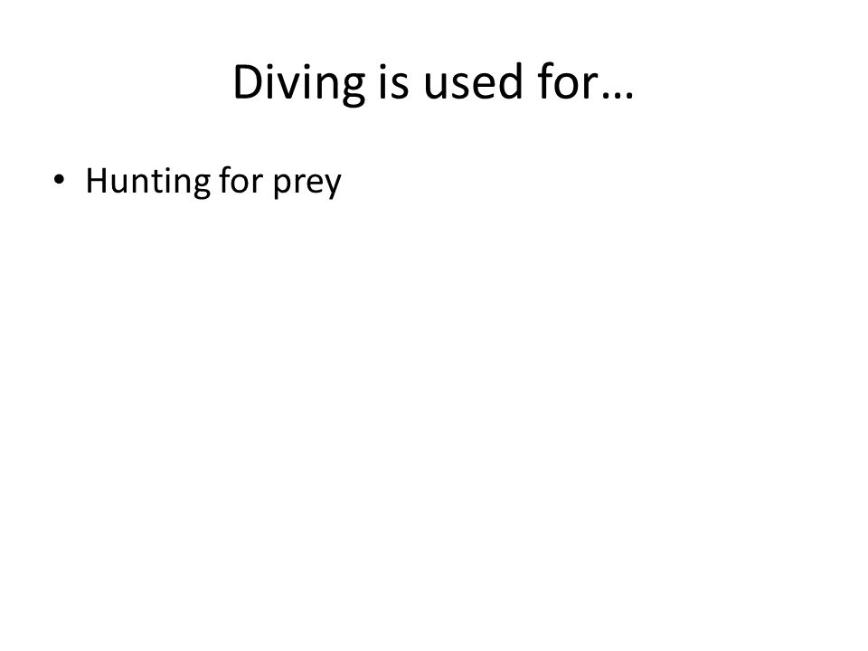 Diving is used for… Hunting for prey