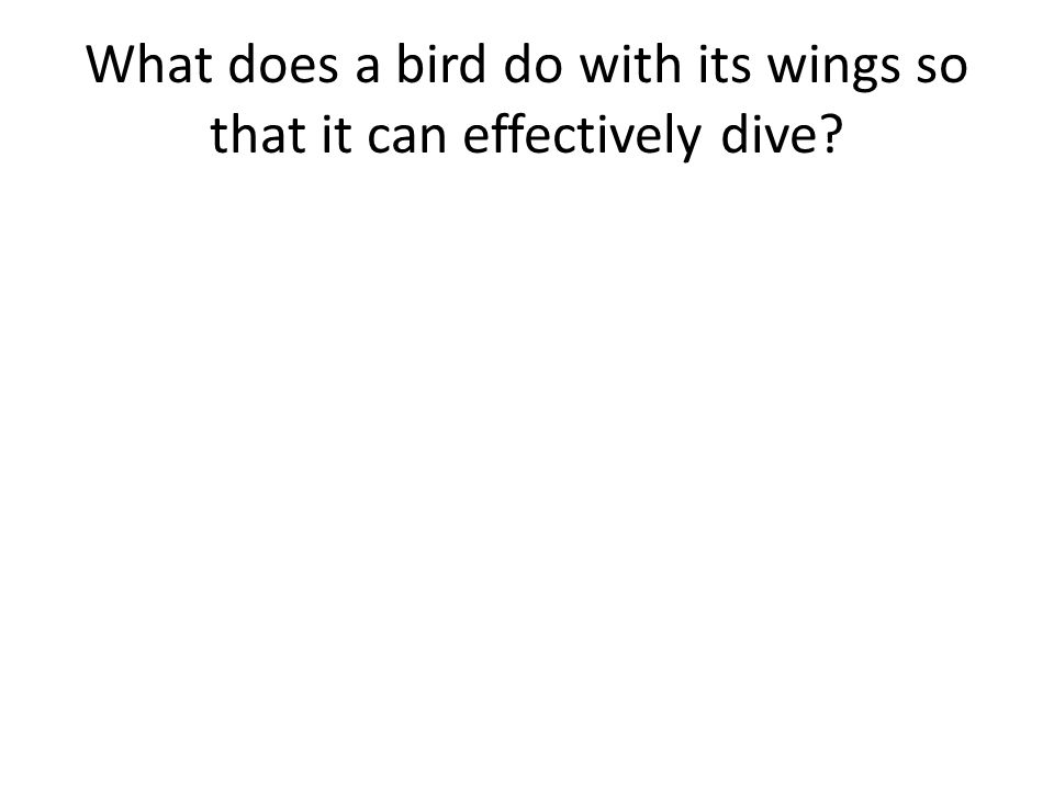 What does a bird do with its wings so that it can effectively dive?