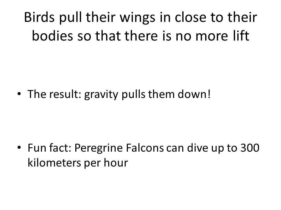 Birds pull their wings in close to their bodies so that there is no more lift The result: gravity pulls them down! Fun fact: Peregrine Falcons can div