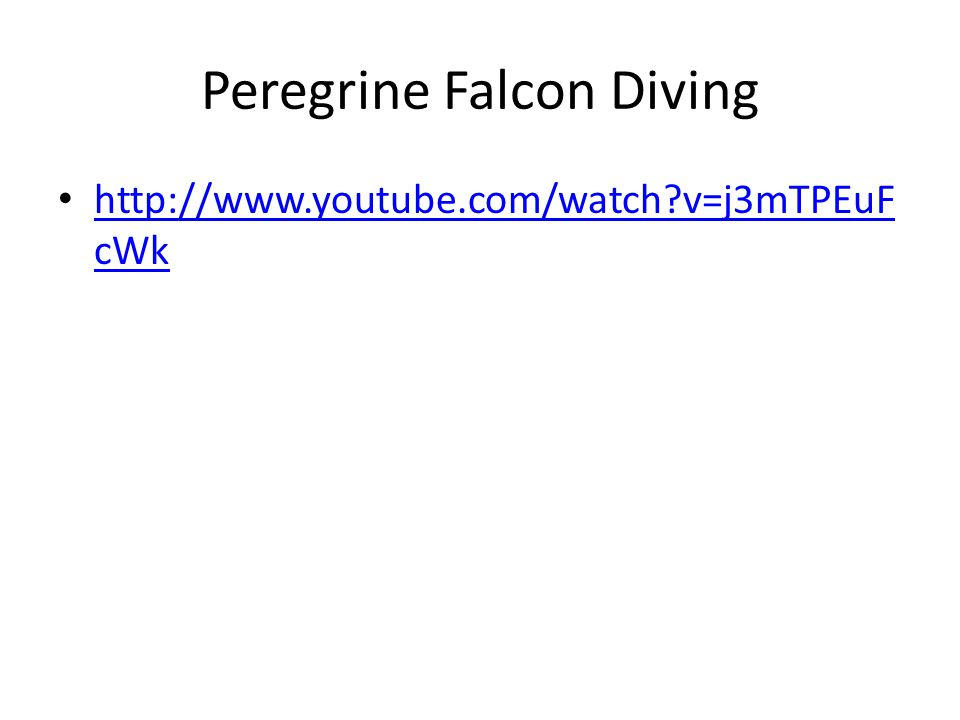 Peregrine Falcon Diving http://www.youtube.com/watch?v=j3mTPEuF cWk http://www.youtube.com/watch?v=j3mTPEuF cWk