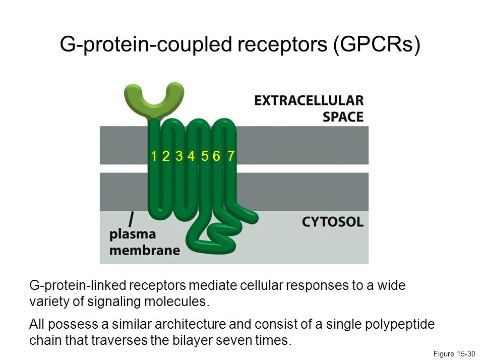 These receptors active their targets indirectly, via a G protein intermediate.