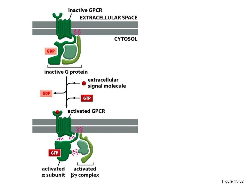Figure 15-19 GAP = GTPase-activating protein GEF =Guanine nucleotide exchange factor The regulation of Ras activity Ras