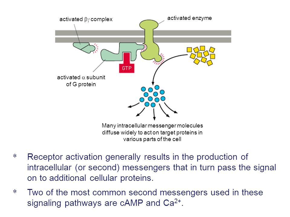 Figure 15-53a Activation of a receptor tyrosine kinase Ligand binding triggers receptor dimerization and the cross- phosphorylation of cytoplasmic domains (autophosphorylation).