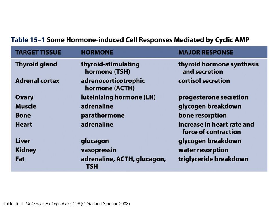 Table 15-2 Molecular Biology of the Cell (© Garland Science 2008)