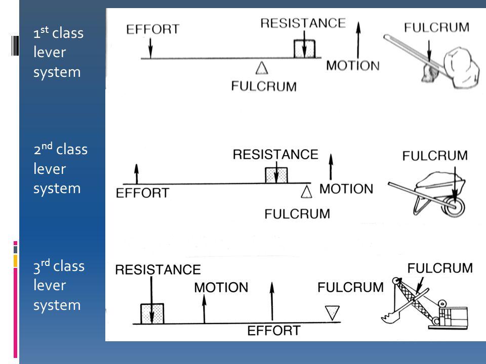 1 st class lever system 2 nd class lever system 3 rd class lever system