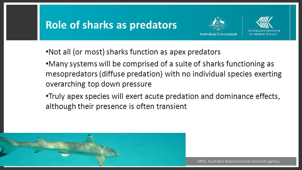 Role of sharks as predators Not all (or most) sharks function as apex predators Many systems will be comprised of a suite of sharks functioning as mes