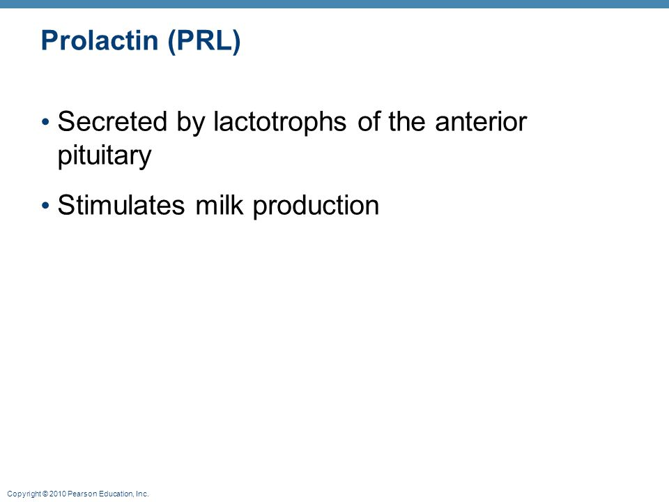 Copyright © 2010 Pearson Education, Inc. Prolactin (PRL) Secreted by lactotrophs of the anterior pituitary Stimulates milk production