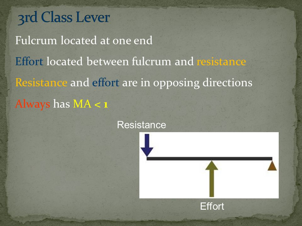 Fulcrum located at one end Effort located between fulcrum and resistance Resistance and effort are in opposing directions Always has MA < 1 Resistance Effort