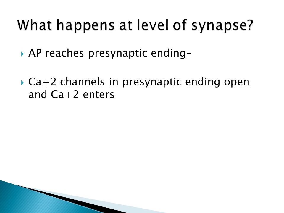  AP reaches presynaptic ending-  Ca+2 channels in presynaptic ending open and Ca+2 enters