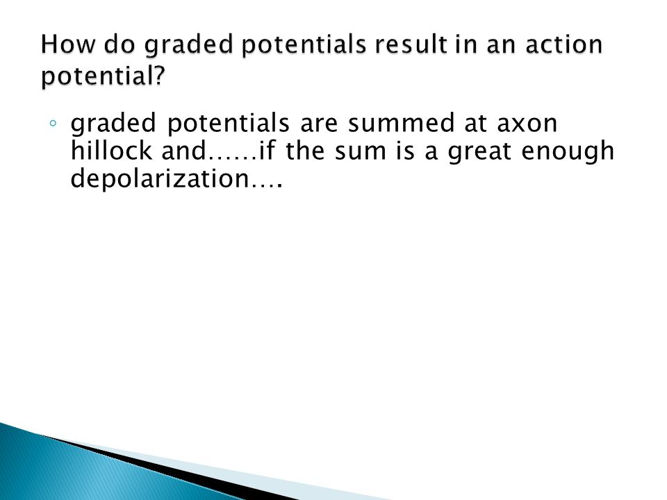 ◦ graded potentials are summed at axon hillock and……if the sum is a great enough depolarization….