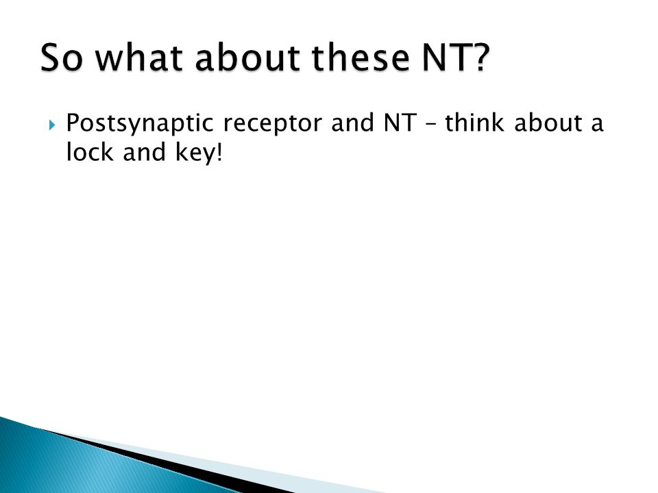  Postsynaptic receptor and NT – think about a lock and key!
