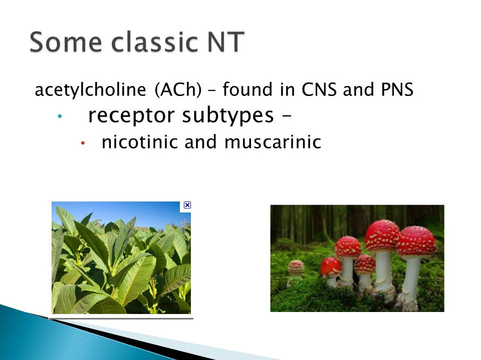 acetylcholine (ACh) – found in CNS and PNS receptor subtypes – nicotinic and muscarinic