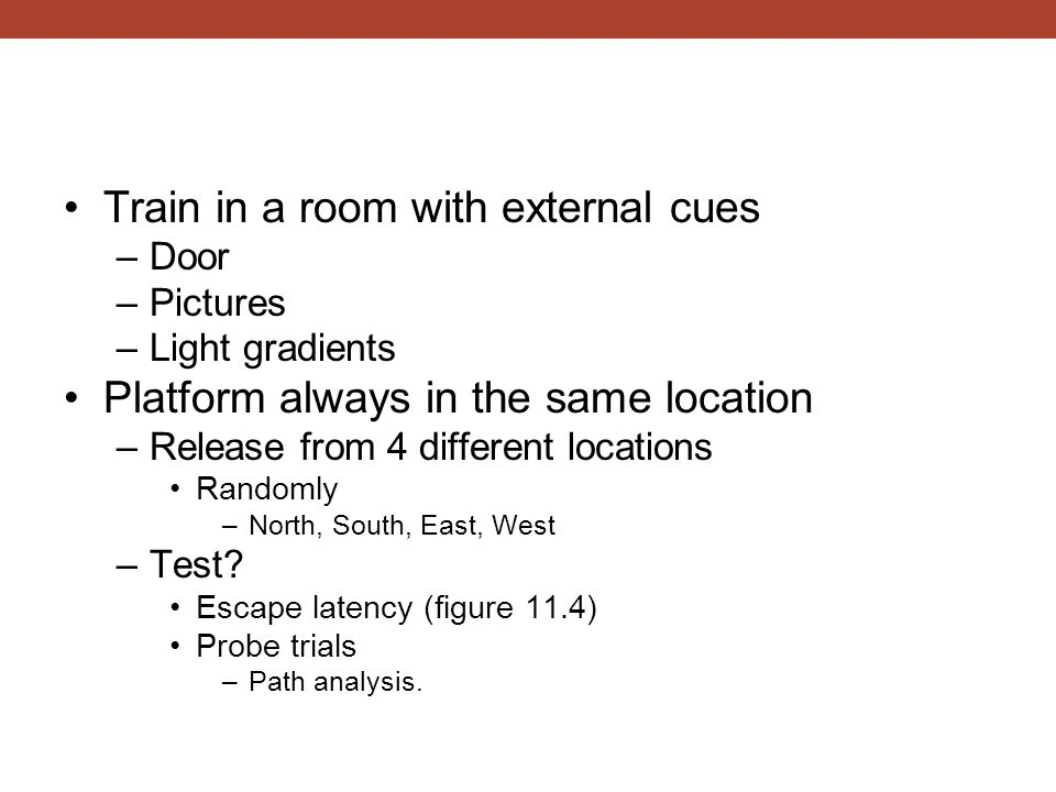 Train in a room with external cues –Door –Pictures –Light gradients Platform always in the same location –Release from 4 different locations Randomly