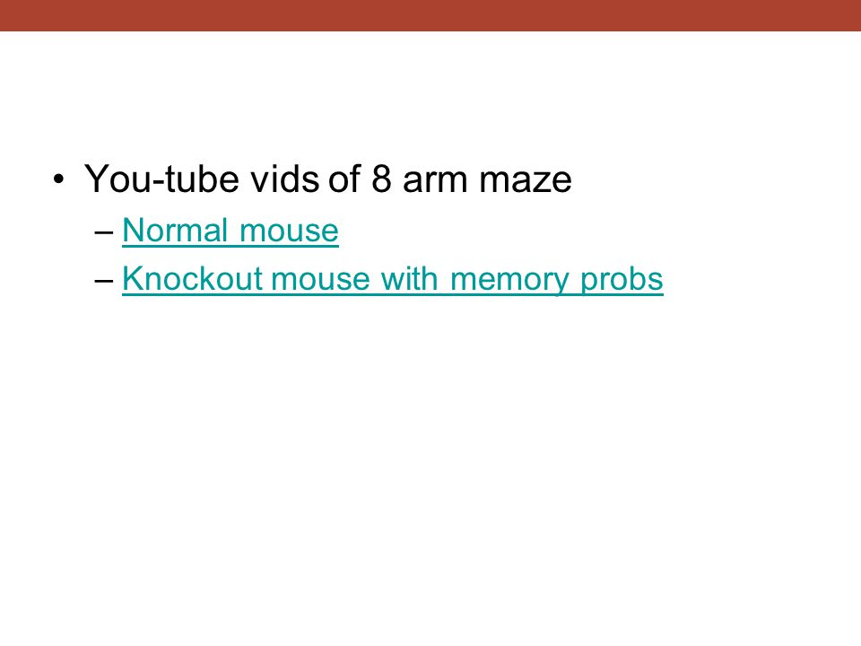 You-tube vids of 8 arm maze –Normal mouseNormal mouse –Knockout mouse with memory probsKnockout mouse with memory probs
