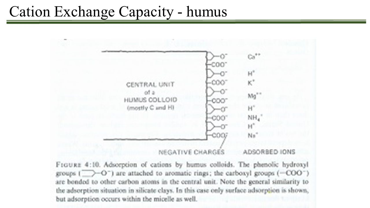 Cation Exchange Capacity - humus