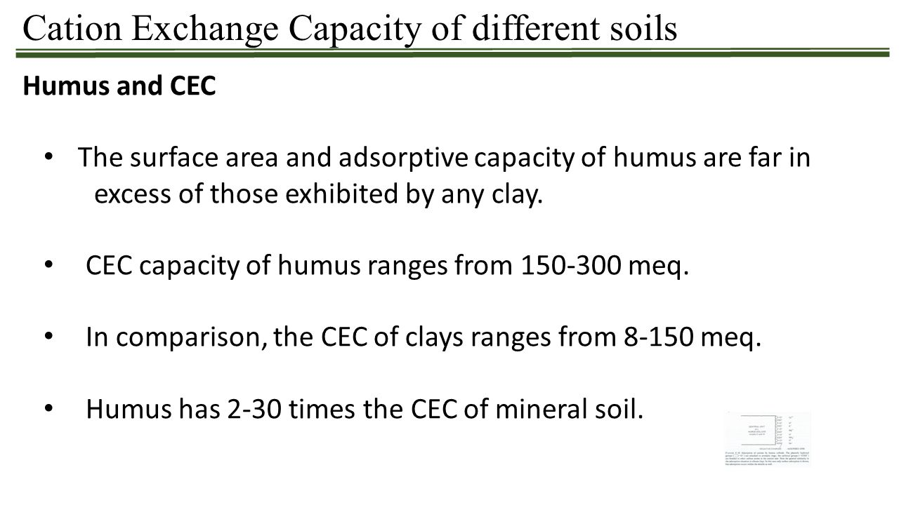 Cation Exchange Capacity of different soils Humus and CEC The surface area and adsorptive capacity of humus are far in excess of those exhibited by an