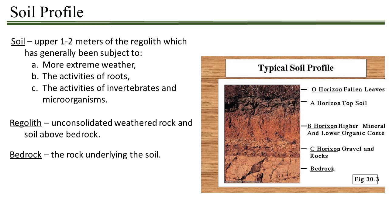 Soil Profile Soil – upper 1-2 meters of the regolith which has generally been subject to: a.More extreme weather, b.The activities of roots, c.The act