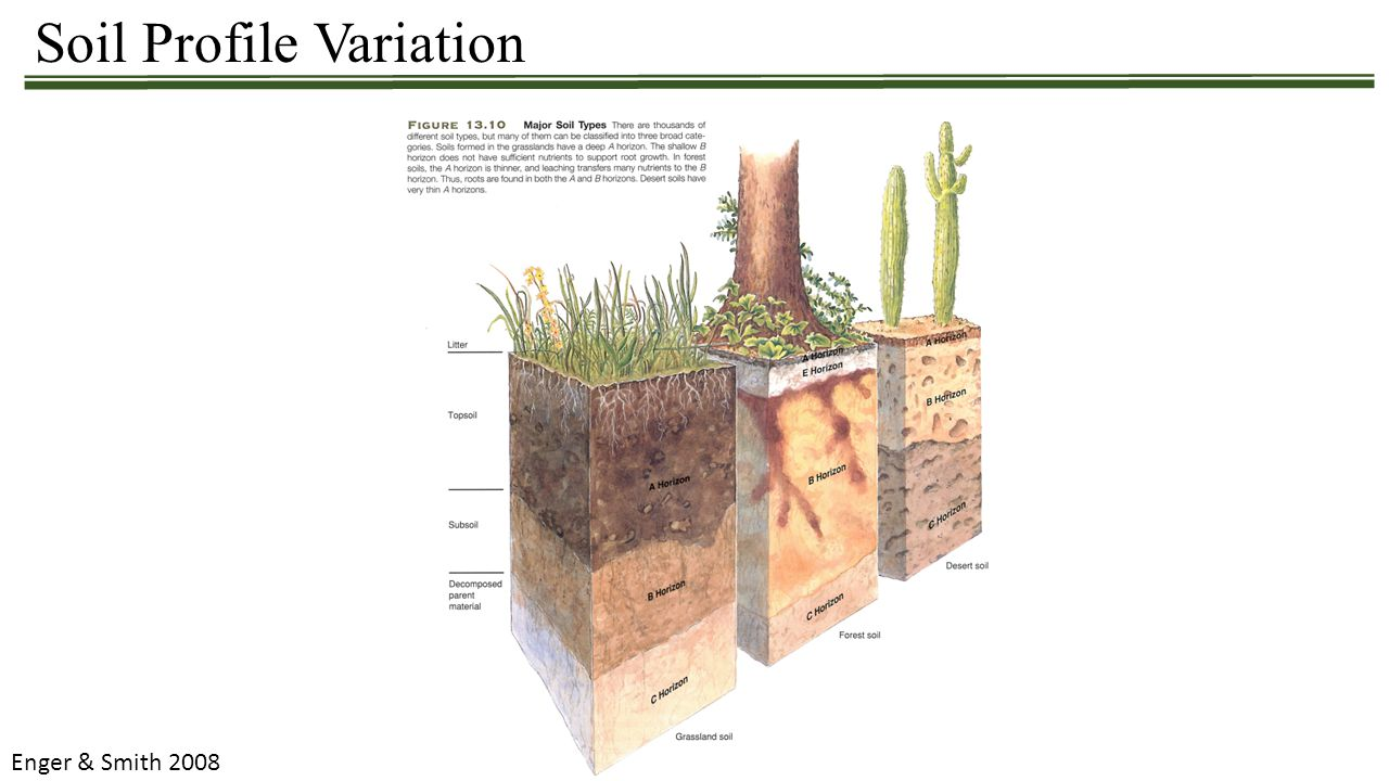 Soil Profile Variation Enger & Smith 2008