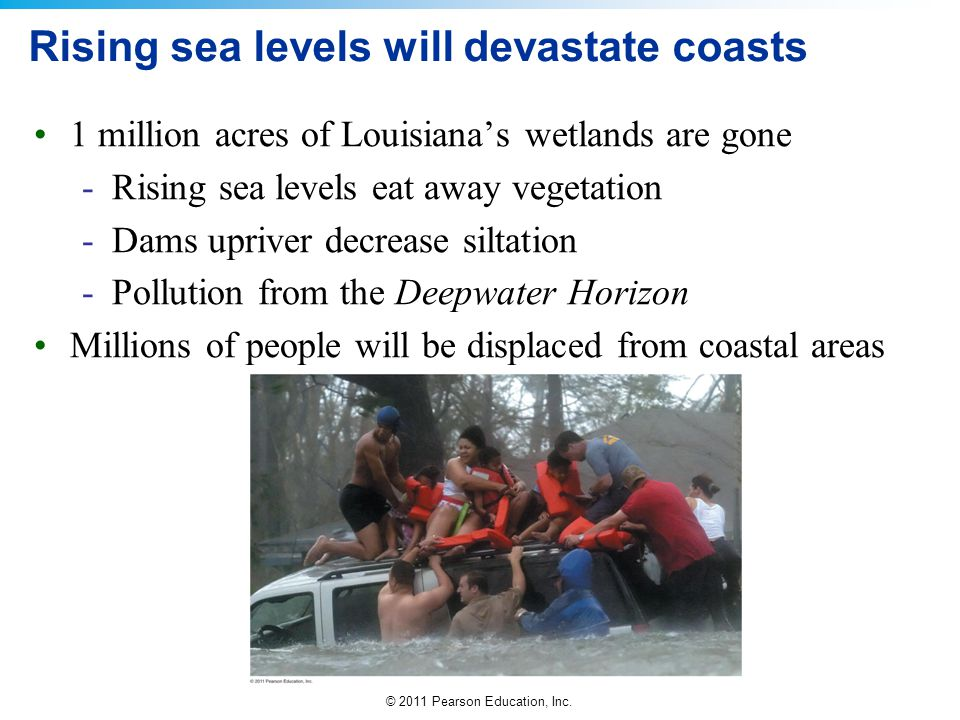 © 2011 Pearson Education, Inc. Rising sea levels will devastate coasts 1 million acres of Louisiana's wetlands are gone -Rising sea levels eat away ve
