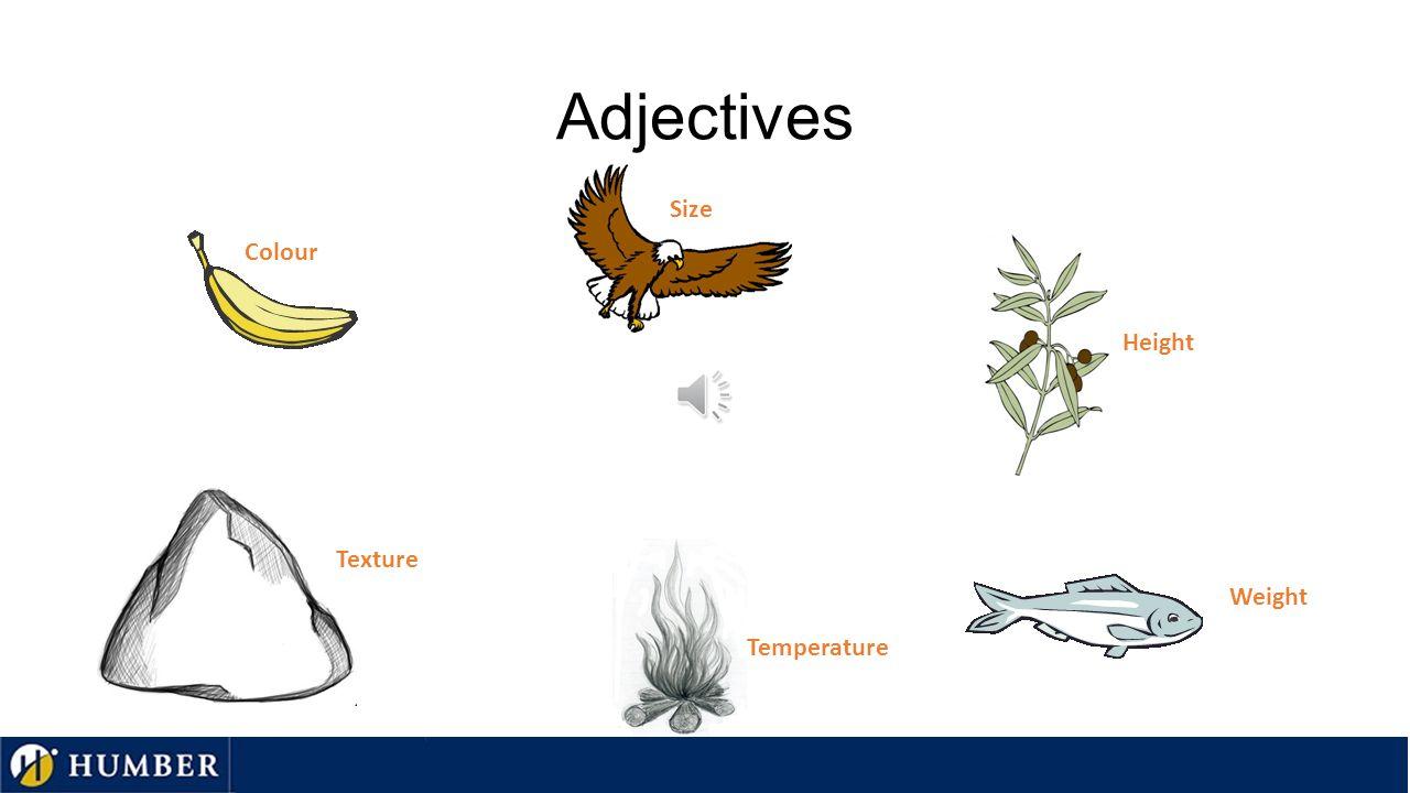 Nouns Fruit Bird Plant Fish Fire Rock