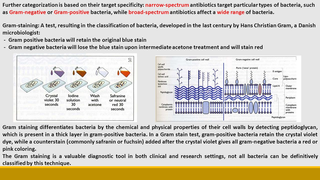 Further categorization is based on their target specificity: narrow-spectrum antibiotics target particular types of bacteria, such as Gram-negative or Gram-positive bacteria, while broad-spectrum antibiotics affect a wide range of bacteria.