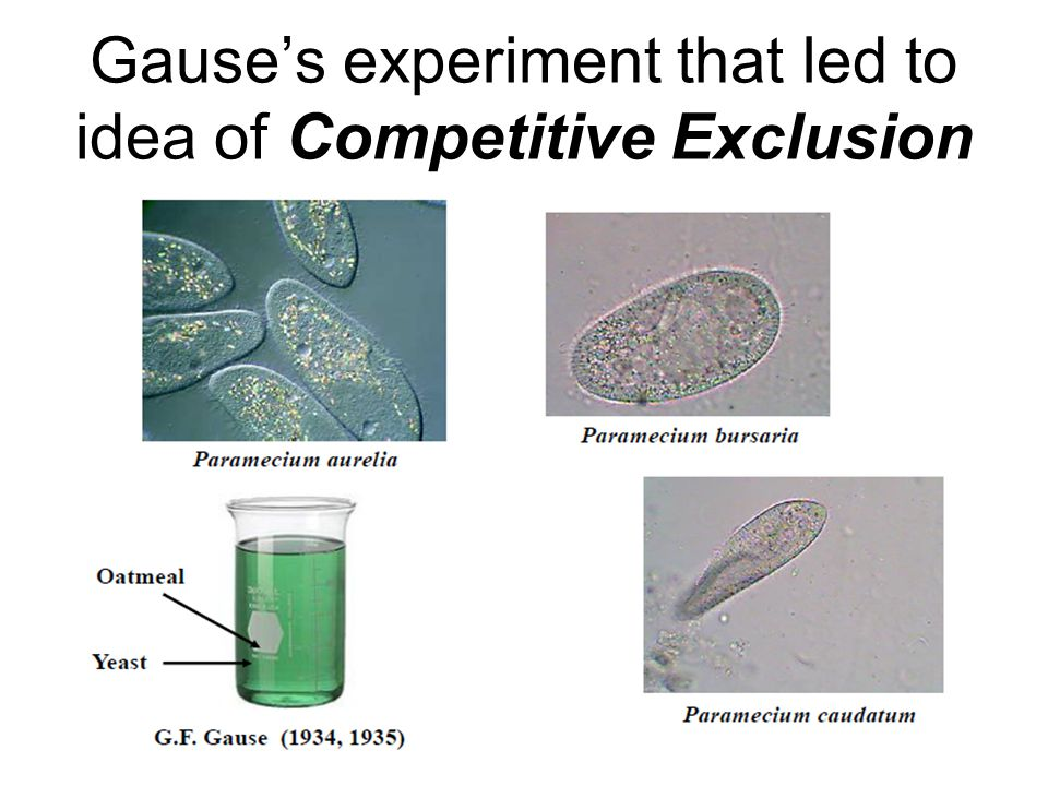 Gause's experiment that led to idea of Competitive Exclusion
