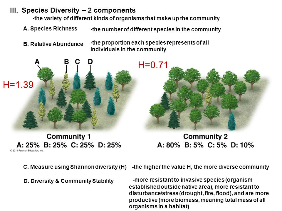 III. Species Diversity – 2 components A. Species Richness -the number of different species in the community B. Relative Abundance -the proportion each