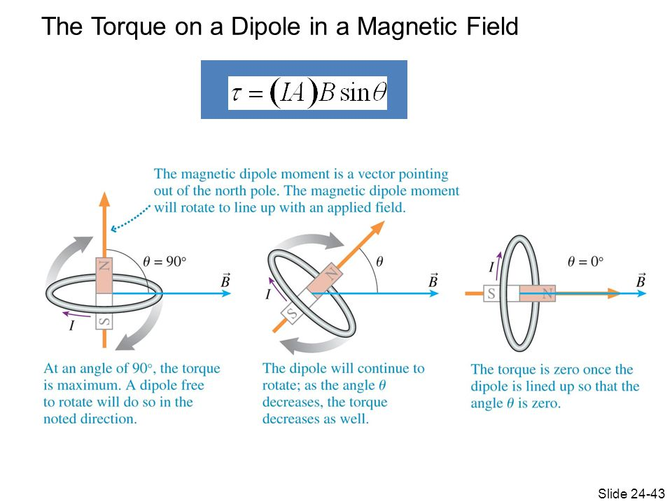 The Torque on a Dipole in a Magnetic Field Slide 24-43