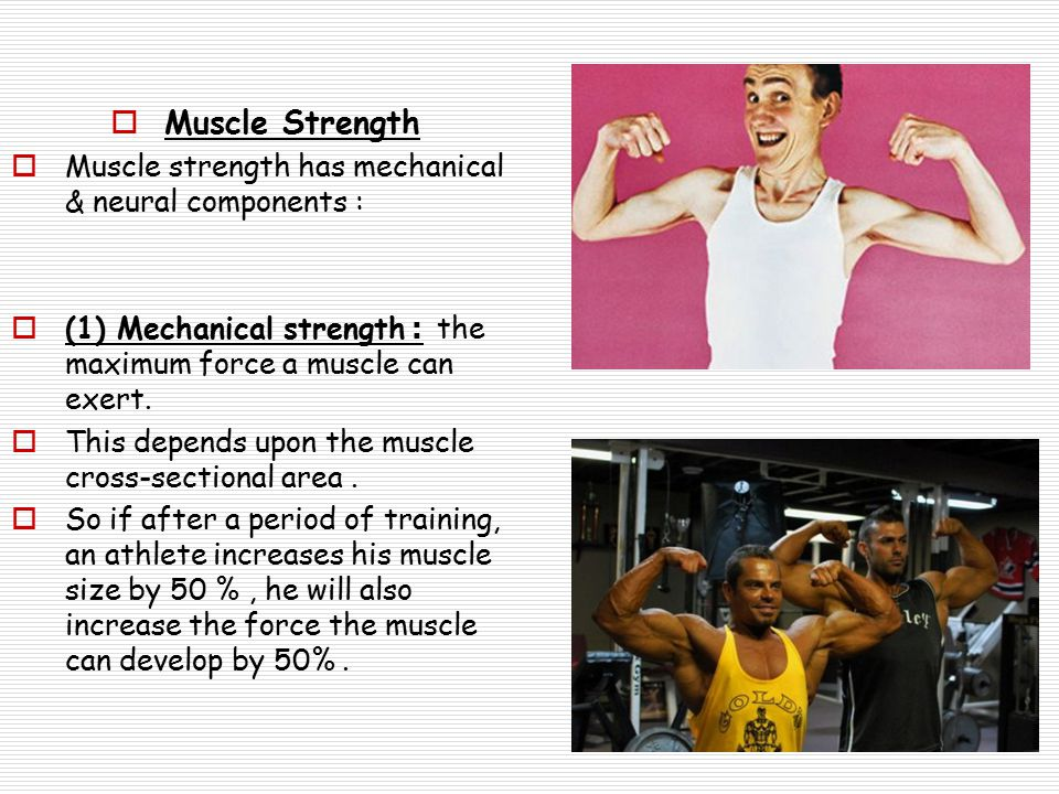  Muscle Strength  Muscle strength has mechanical & neural components :  (1) Mechanical strength: the maximum force a muscle can exert.