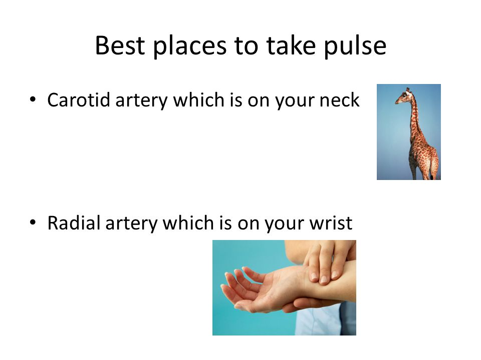 Best places to take pulse Carotid artery which is on your neck Radial artery which is on your wrist