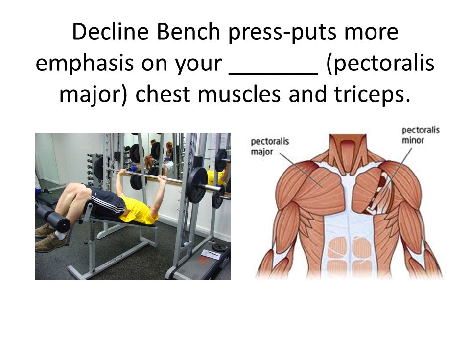 Decline Bench press-puts more emphasis on your _______ (pectoralis major) chest muscles and triceps.