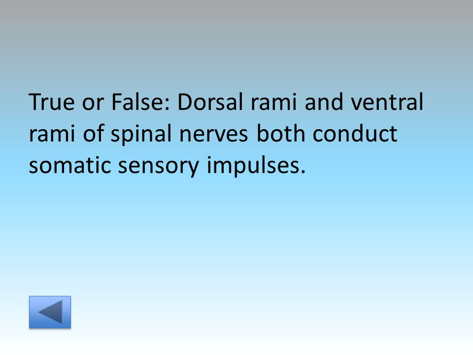 True or False: Dorsal rami and ventral rami of spinal nerves both conduct somatic sensory impulses.